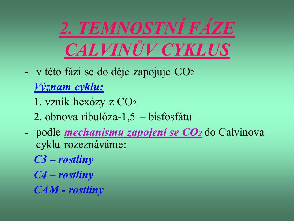 2. TEMNOSTNÍ FÁZE CALVINŮV CYKLUS -v této fázi se do děje zapojuje CO 2 Význam cyklu: 1. vznik hexózy z CO 2 2. obnova ribulóza-1,5 – bisfosfátu -podl