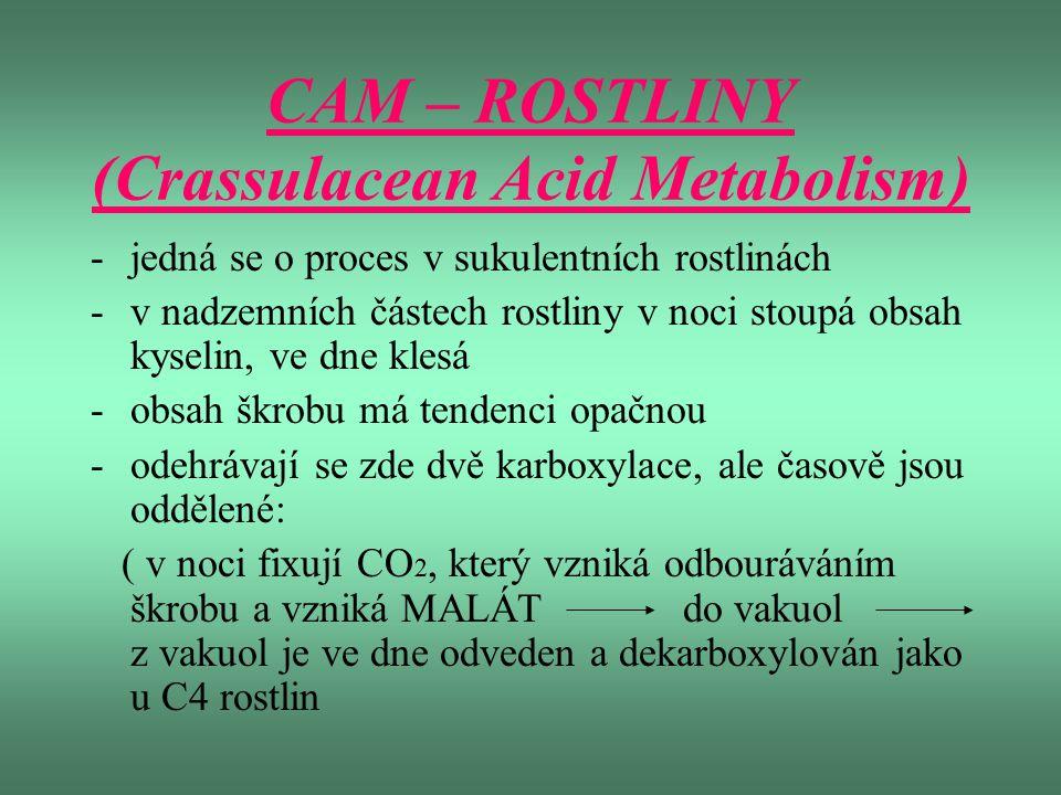 CAM – ROSTLINY (Crassulacean Acid Metabolism) -jedná se o proces v sukulentních rostlinách -v nadzemních částech rostliny v noci stoupá obsah kyselin,