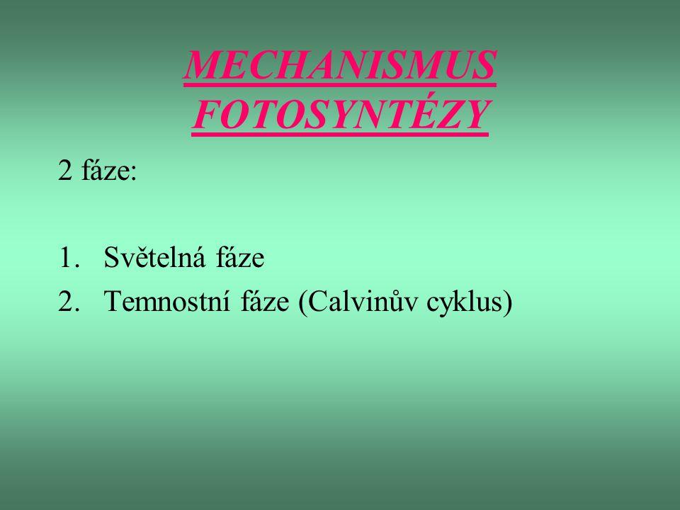 MECHANISMUS FOTOSYNTÉZY 2 fáze: 1.Světelná fáze 2.Temnostní fáze (Calvinův cyklus)