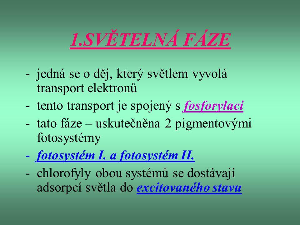 1.SVĚTELNÁ FÁZE -jedná se o děj, který světlem vyvolá transport elektronů -tento transport je spojený s fosforylací -tato fáze – uskutečněna 2 pigment
