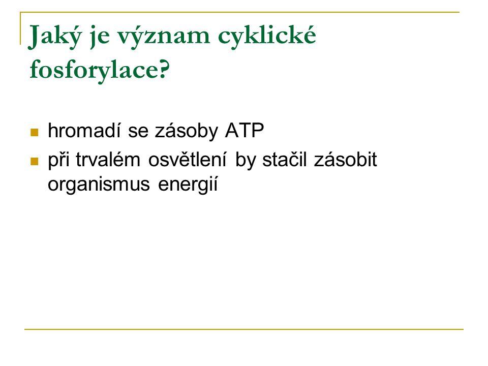 Jaký je význam cyklické fosforylace.