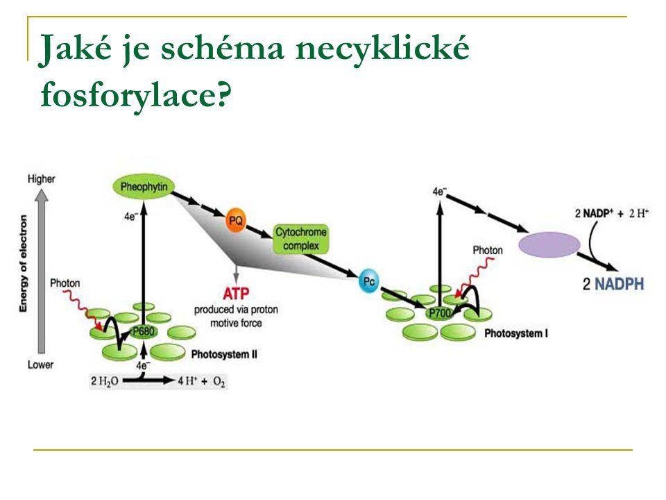 Jaké je schéma necyklické fosforylace?