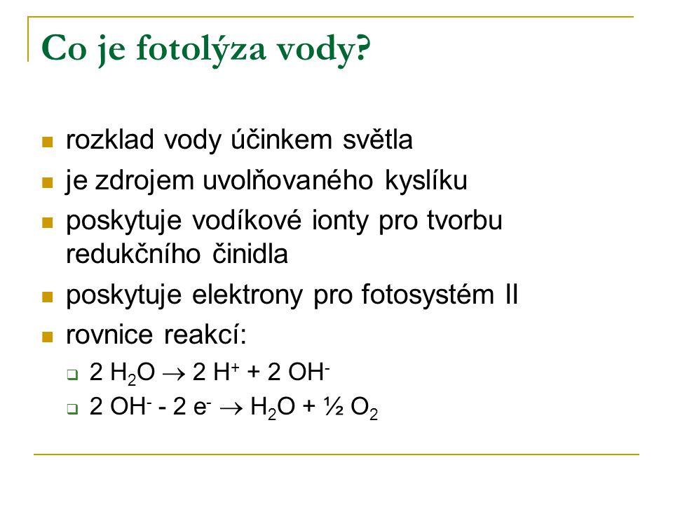 Co je fotolýza vody? rozklad vody účinkem světla je zdrojem uvolňovaného kyslíku poskytuje vodíkové ionty pro tvorbu redukčního činidla poskytuje elek