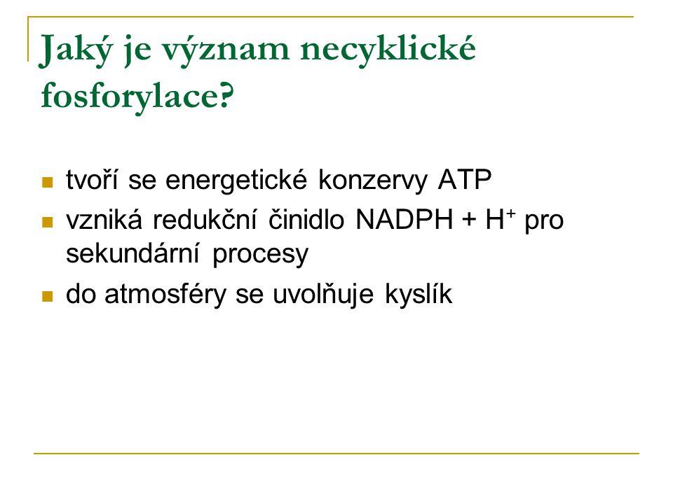 Jaký je význam necyklické fosforylace? tvoří se energetické konzervy ATP vzniká redukční činidlo NADPH + H + pro sekundární procesy do atmosféry se uv