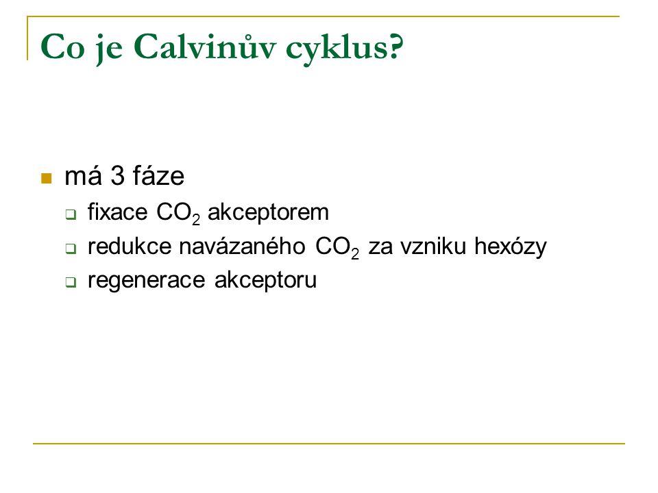 Co je Calvinův cyklus? má 3 fáze  fixace CO 2 akceptorem  redukce navázaného CO 2 za vzniku hexózy  regenerace akceptoru
