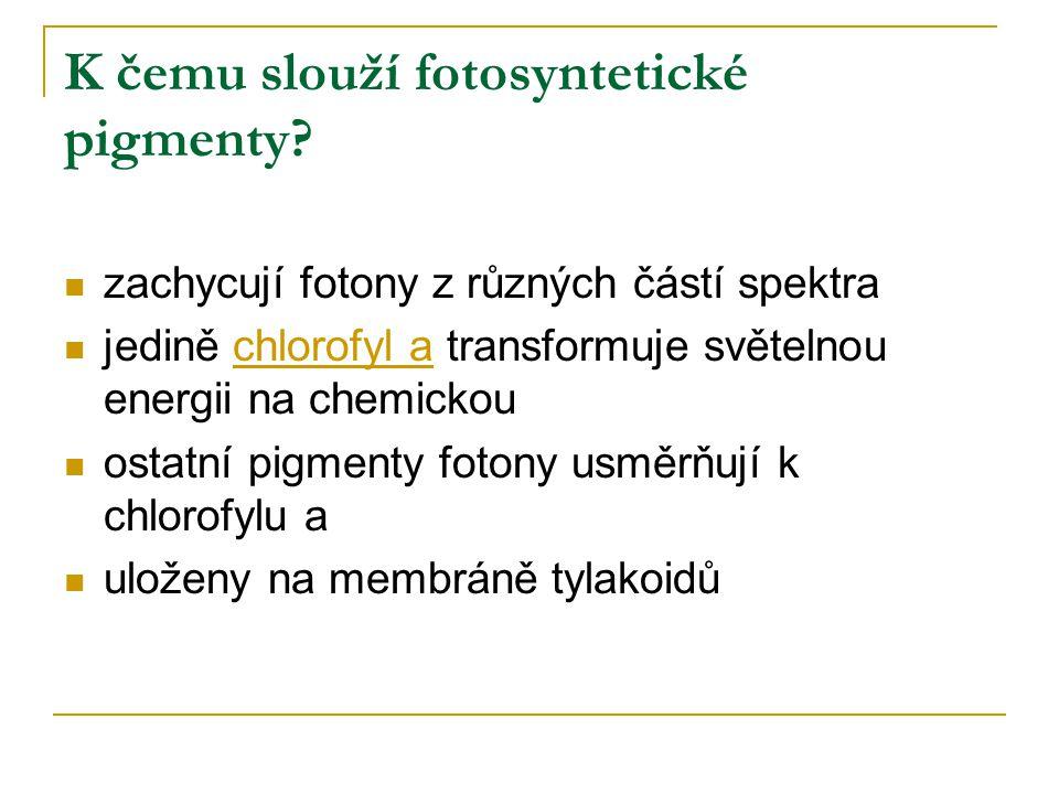 K čemu slouží fotosyntetické pigmenty.