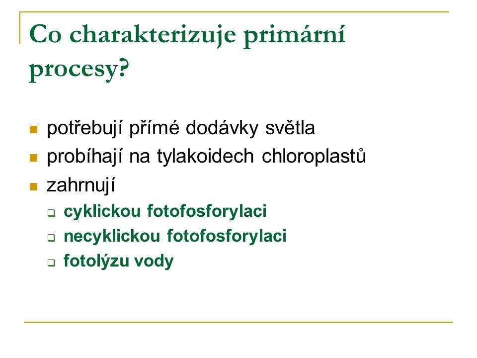 Co charakterizuje primární procesy? potřebují přímé dodávky světla probíhají na tylakoidech chloroplastů zahrnují  cyklickou fotofosforylaci  necykl