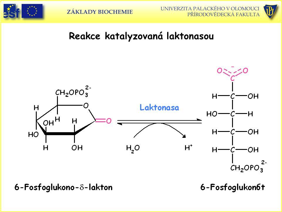 Reakce katalyzovaná laktonasou