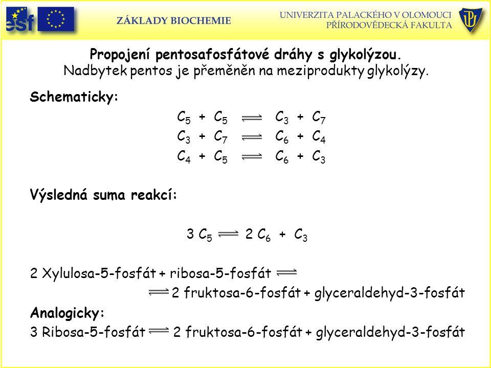 Propojení pentosafosfátové dráhy s glykolýzou. Nadbytek pentos je přeměněn na meziprodukty glykolýzy. Schematicky: C 5 + C 5 C 3 + C 7 C 3 + C 7 C 6 +