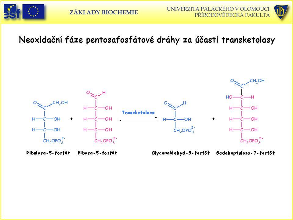 Neoxidační fáze pentosafosfátové dráhy za účasti transketolasy