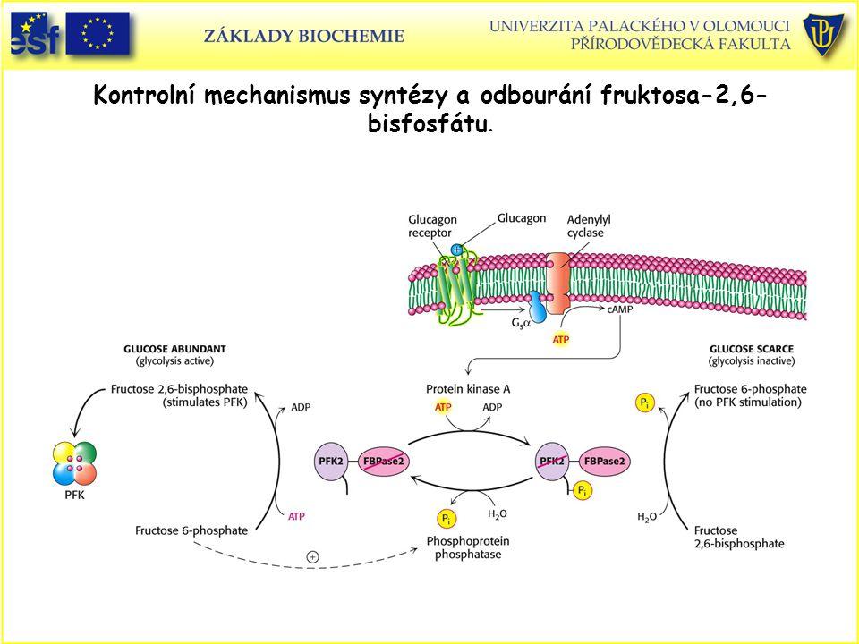 Kontrolní mechanismus syntézy a odbourání fruktosa-2,6- bisfosfátu.