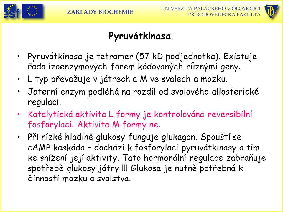 Pyruvátkinasa. Pyruvátkinasa je tetramer (57 kD podjednotka). Existuje řada izoenzymových forem kódovaných různými geny. L typ převažuje v játrech a M