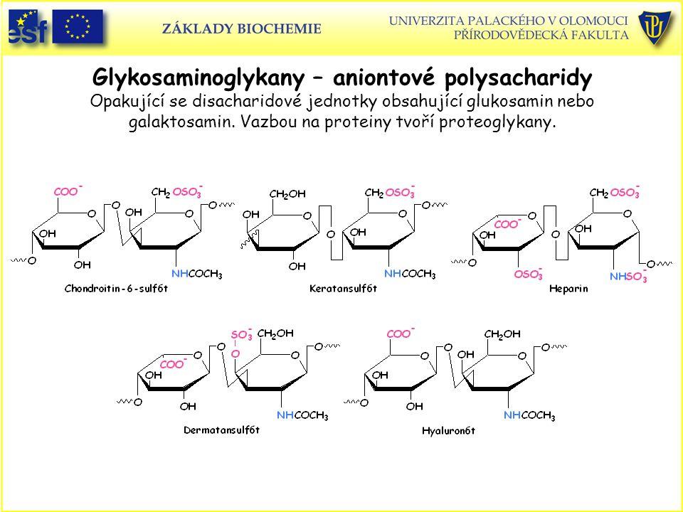 Glykosaminoglykany – aniontové polysacharidy Opakující se disacharidové jednotky obsahující glukosamin nebo galaktosamin. Vazbou na proteiny tvoří pro