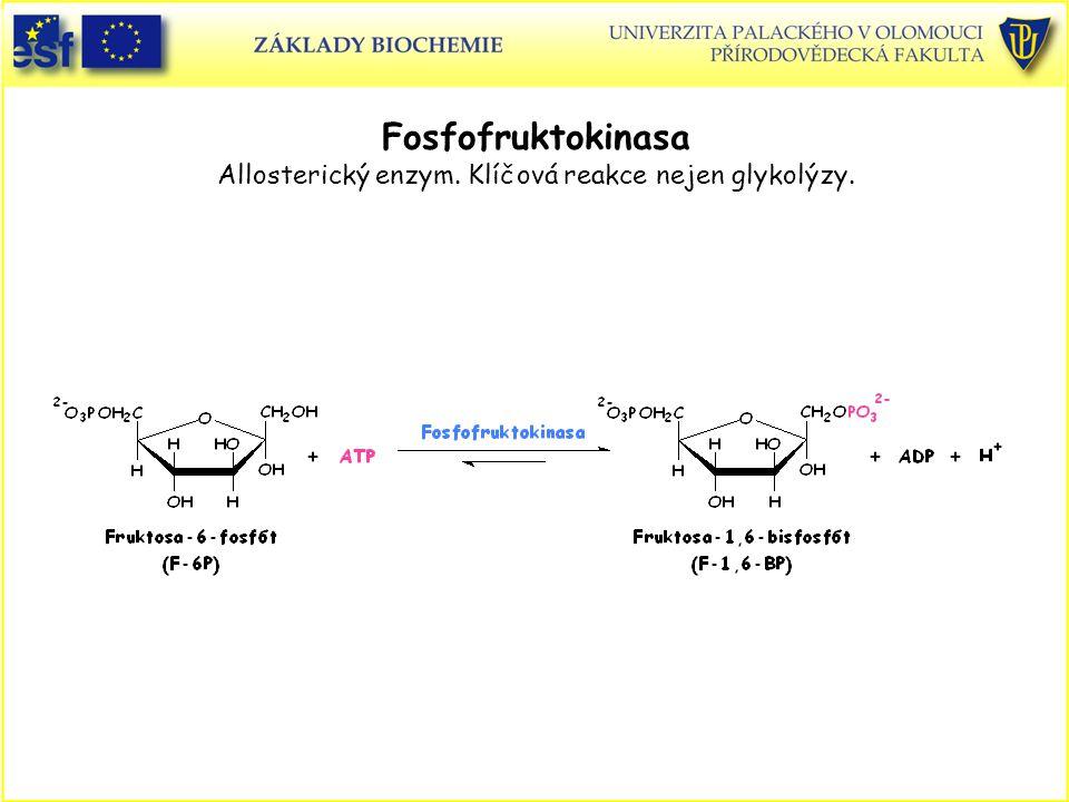 Fosfofruktokinasa Allosterický enzym. Klíčová reakce nejen glykolýzy.