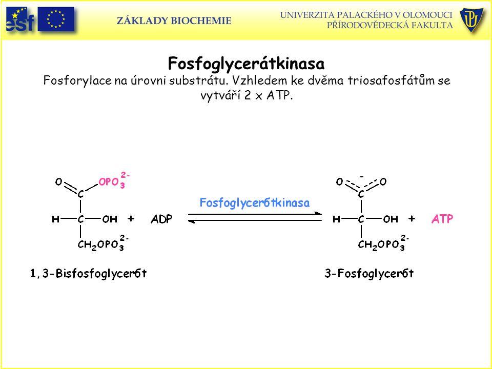 Fosfoglycerátkinasa Fosforylace na úrovni substrátu. Vzhledem ke dvěma triosafosfátům se vytváří 2 x ATP.