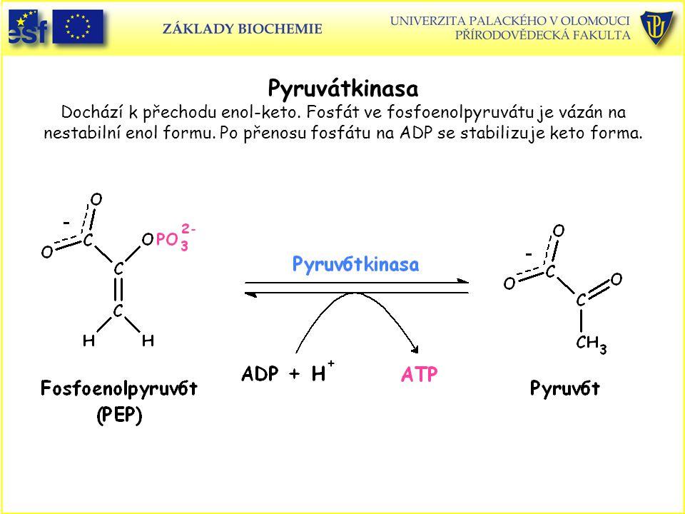 Pyruvátkinasa Dochází k přechodu enol-keto. Fosfát ve fosfoenolpyruvátu je vázán na nestabilní enol formu. Po přenosu fosfátu na ADP se stabilizuje ke