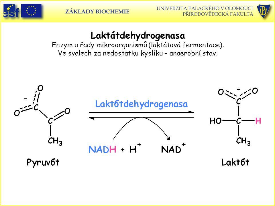 Laktátdehydrogenasa Enzym u řady mikroorganismů (laktátová fermentace). Ve svalech za nedostatku kyslíku – anaerobní stav.