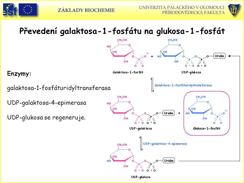 Převedení galaktosa-1-fosfátu na glukosa-1-fosfát Enzymy: galaktosa-1-fosfáturidyltransferasa UDP-galaktosa-4-epimerasa UDP-glukosa se regeneruje.
