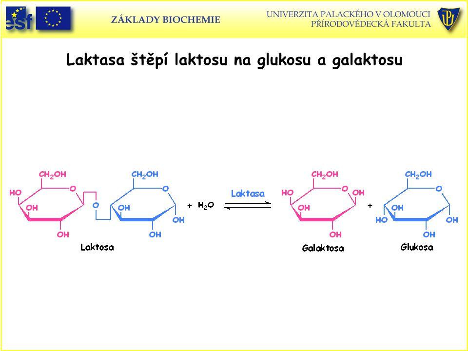 Laktasa štěpí laktosu na glukosu a galaktosu