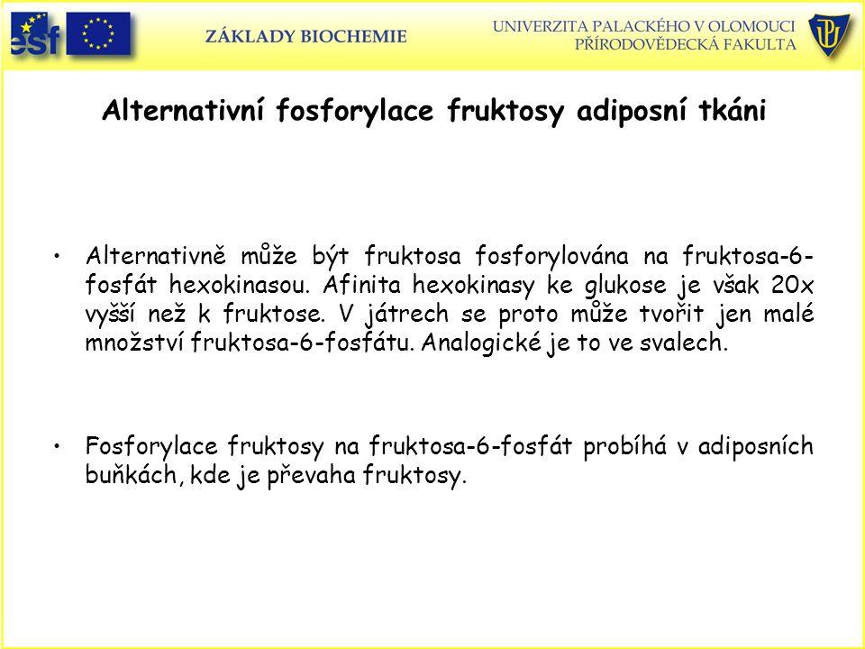 Alternativní fosforylace fruktosy adiposní tkáni Alternativně může být fruktosa fosforylována na fruktosa-6- fosfát hexokinasou. Afinita hexokinasy ke