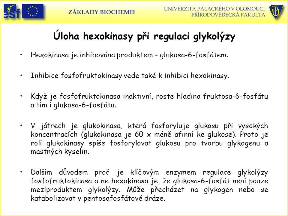 Úloha hexokinasy při regulaci glykolýzy Hexokinasa je inhibována produktem – glukosa-6-fosfátem. Inhibice fosfofruktokinasy vede také k inhibici hexok