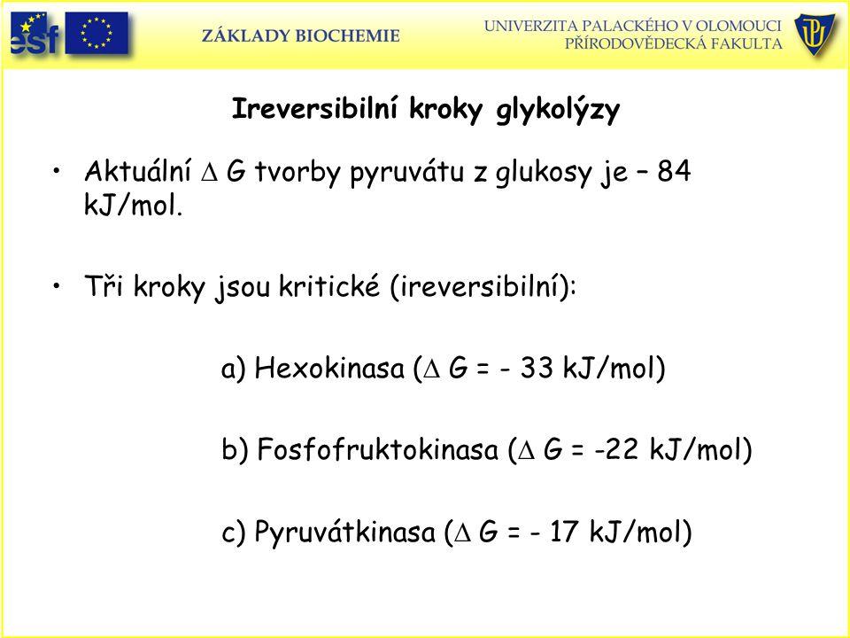 Ireversibilní kroky glykolýzy Aktuální  G tvorby pyruvátu z glukosy je – 84 kJ/mol. Tři kroky jsou kritické (ireversibilní): a) Hexokinasa (  G = -