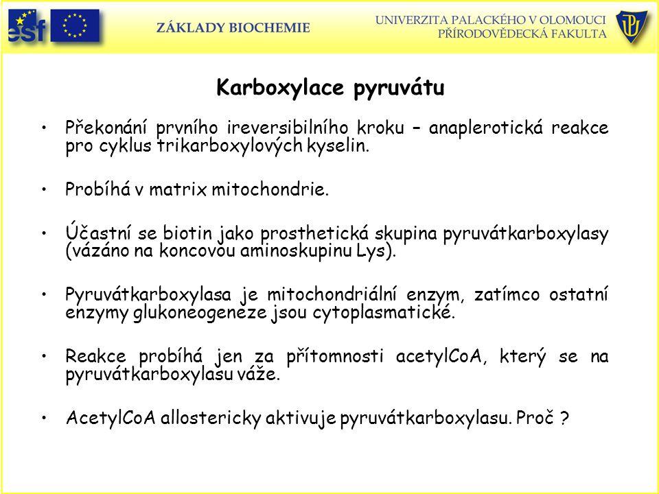 Karboxylace pyruvátu Překonání prvního ireversibilního kroku – anaplerotická reakce pro cyklus trikarboxylových kyselin. Probíhá v matrix mitochondrie