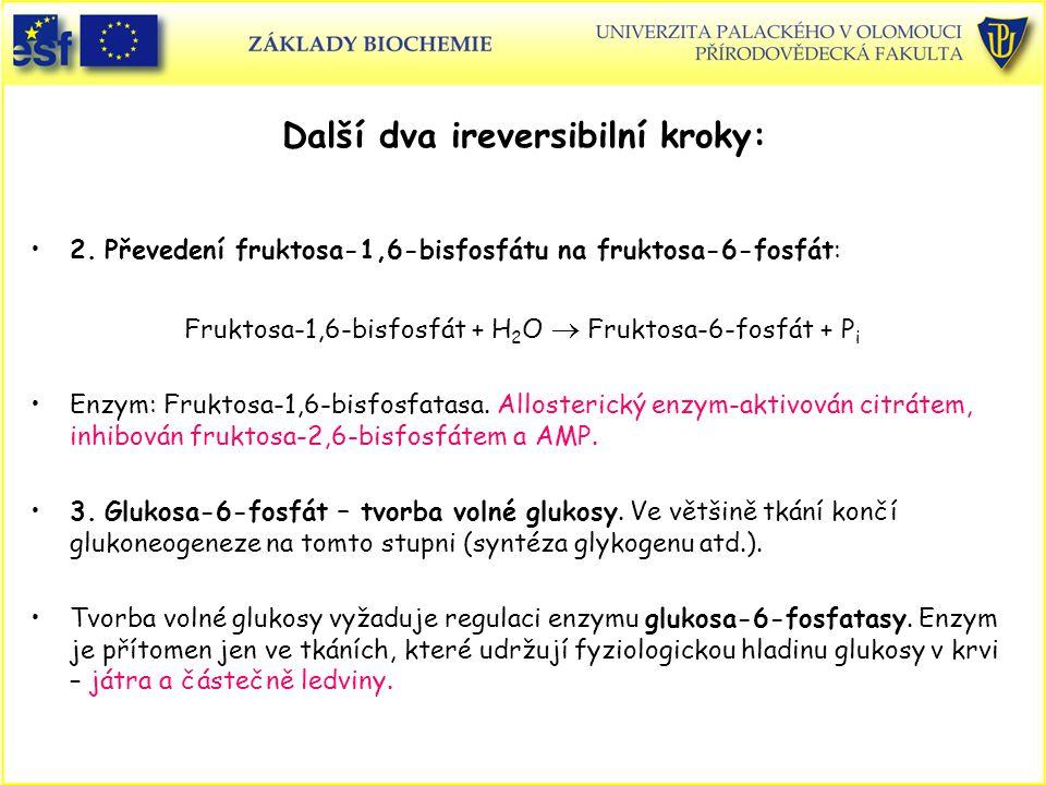 Další dva ireversibilní kroky: 2. Převedení fruktosa-1,6-bisfosfátu na fruktosa-6-fosfát: Fruktosa-1,6-bisfosfát + H 2 O  Fruktosa-6-fosfát + P i Enz