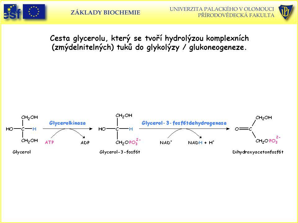 Cesta glycerolu, který se tvoří hydrolýzou komplexních (zmýdelnitelných) tuků do glykolýzy / glukoneogeneze.