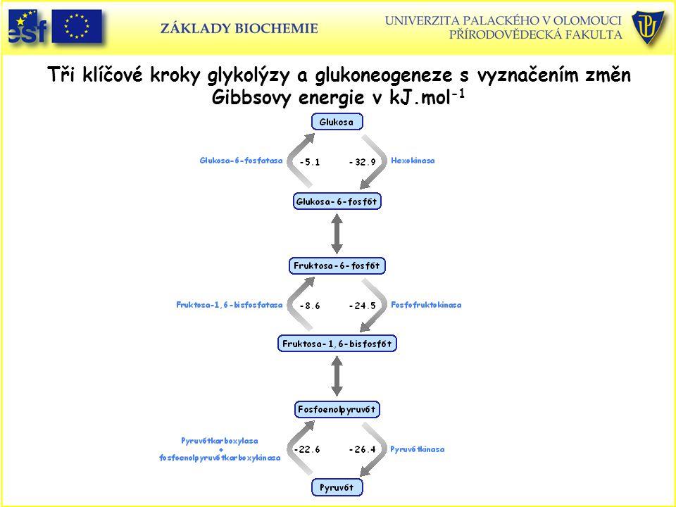 Tři klíčové kroky glykolýzy a glukoneogeneze s vyznačením změn Gibbsovy energie v kJ.mol -1