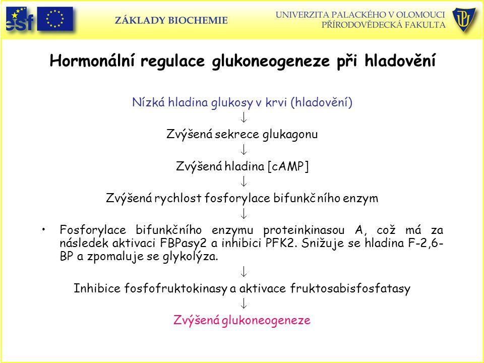 Hormonální regulace glukoneogeneze při hladovění Nízká hladina glukosy v krvi (hladovění)  Zvýšená sekrece glukagonu  Zvýšená hladina [cAMP]  Zvýše