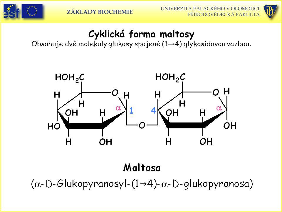 Cyklická forma maltosy Obsahuje dvě molekuly glukosy spojené (1 → 4) glykosidovou vazbou.