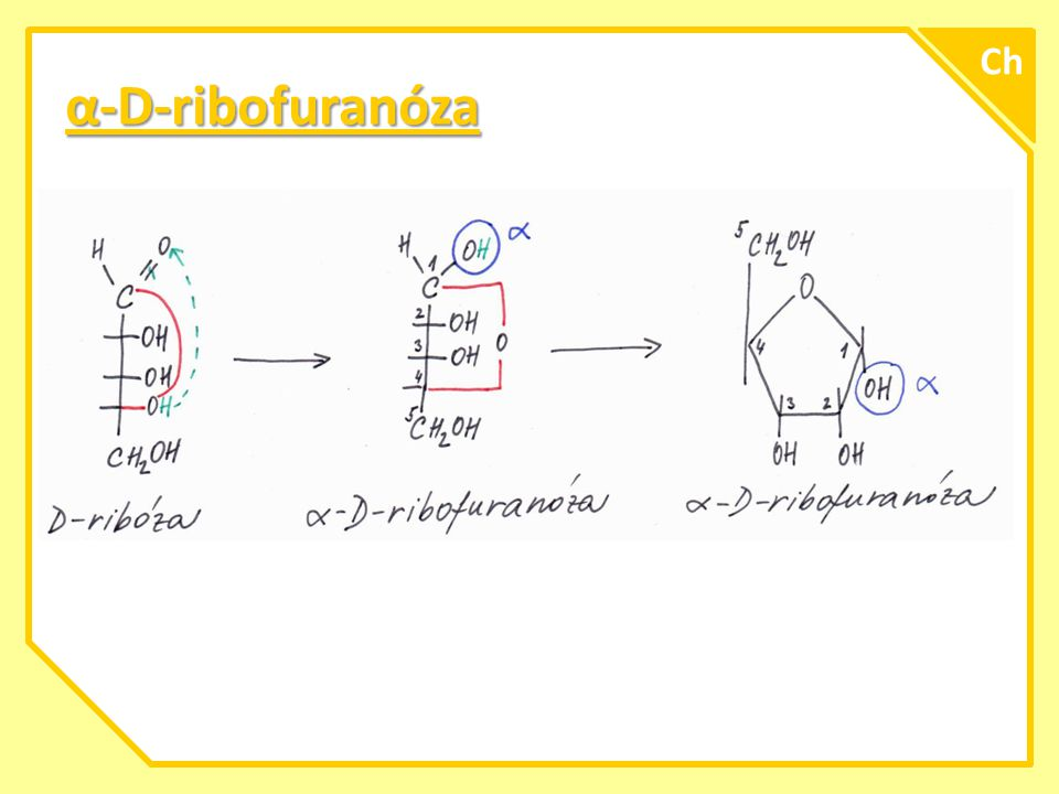 α-L-fruktofuranóza A Ch