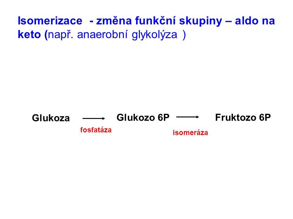Isomerizace - změna funkční skupiny – aldo na keto (např. anaerobní glykolýza ) Glukoza Glukozo 6P Fruktozo 6P fosfatáza isomeráza