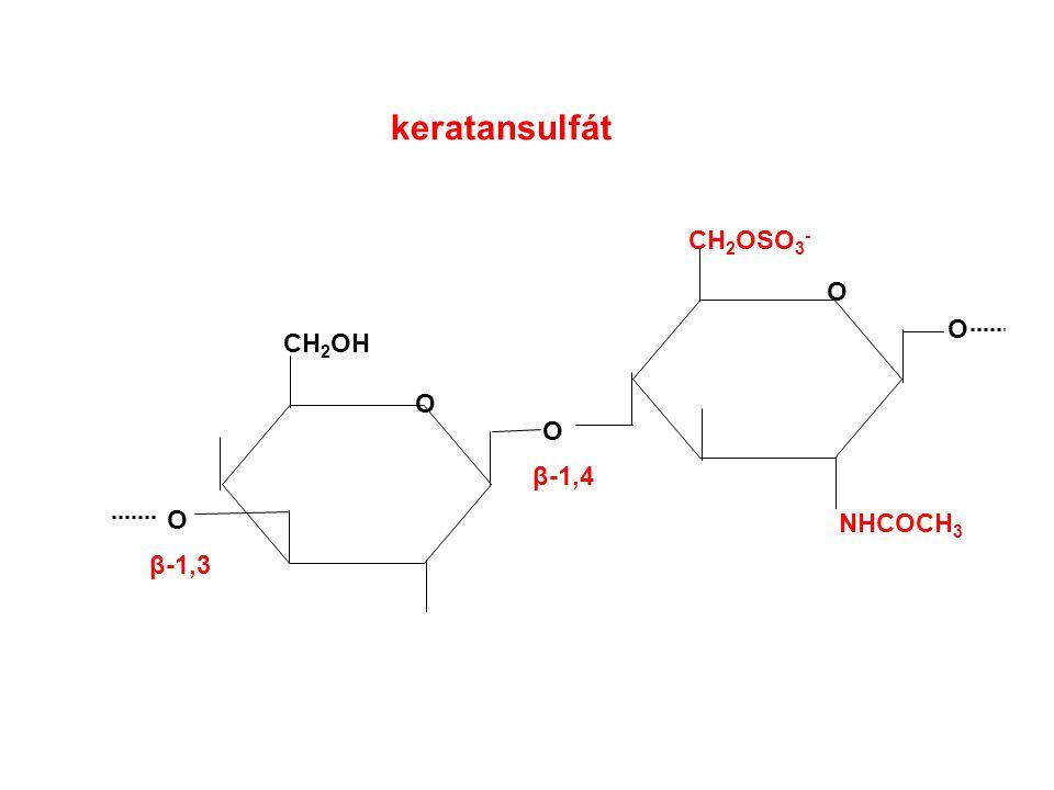 keratansulfát CH 2 OH O CH 2 OSO 3 - O O O β-1,3 O NHCOCH 3 β-1,4