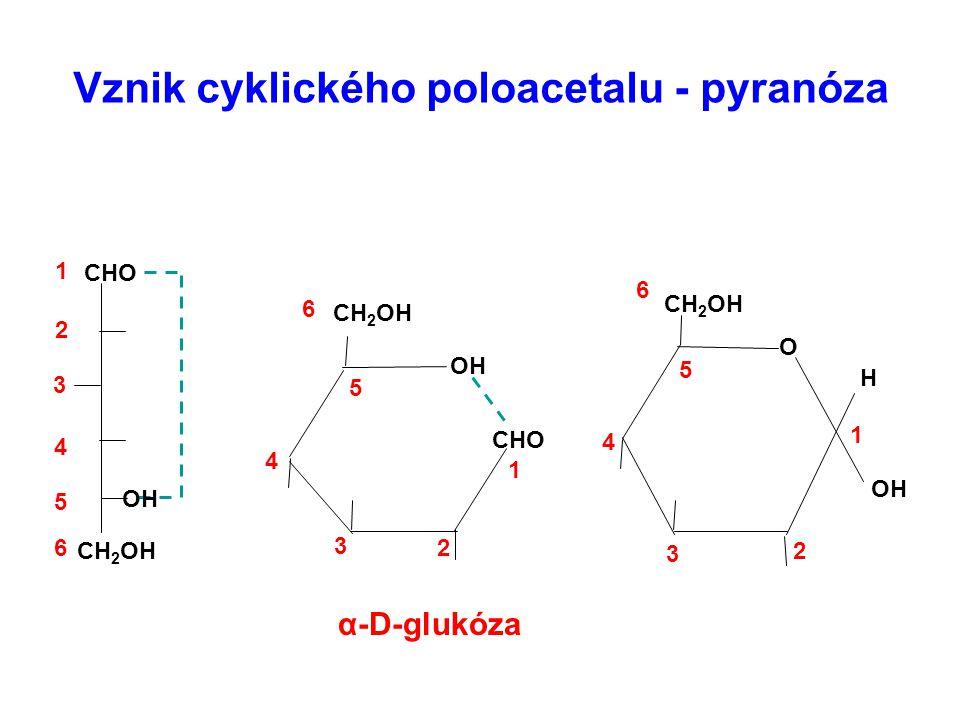 Vznik cyklického poloacetalu - pyranóza CHO CH 2 OH H O CHO OH CH 2 OH OH 1 2 3 4 5 6 6 5 4 3 2 1 6 5 4 3 2 1 α-D-glukóza OH