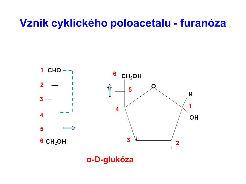 Tvorba glykosidů – nahrazením vodíku v poloacetalu ( alkylem nebo arylem ) za odštěpení vody Rozdělení – podle složení podjednotek Homoglykosidy – tvořeny pouze cukry Heteroglykosidy – mají i necukernou složku – aglykon