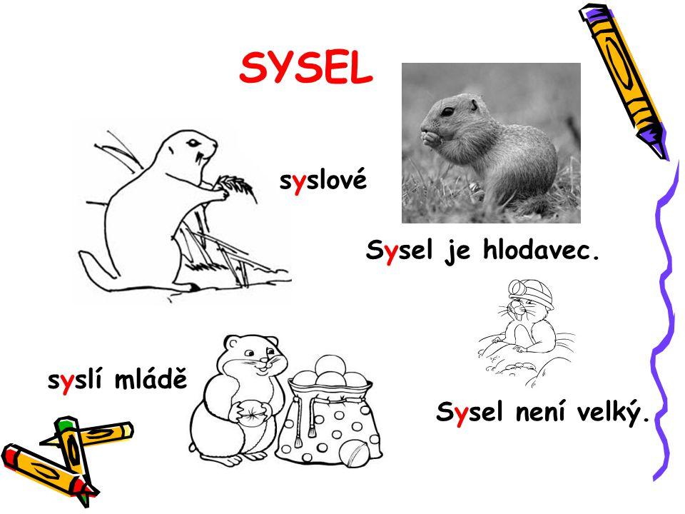 SYSEL Sysel není velký. syslí mládě Sysel je hlodavec. syslové