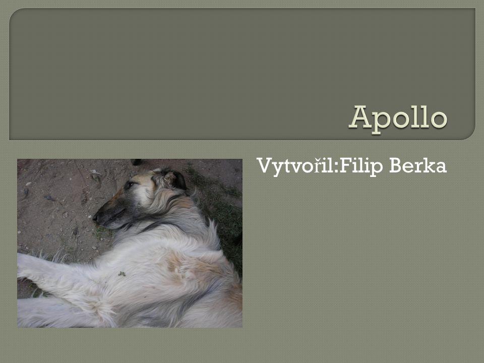 AApollo je chrt.RRuský chrt, neboli barzoj pat ř í mezi psy.