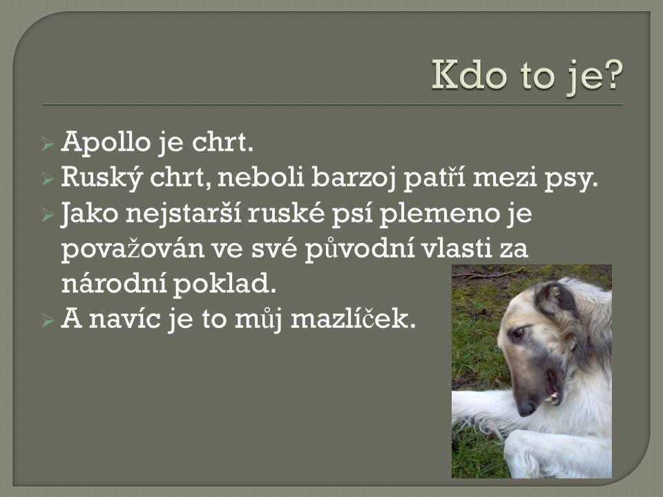 AApollo je chrt. RRuský chrt, neboli barzoj pat ř í mezi psy.