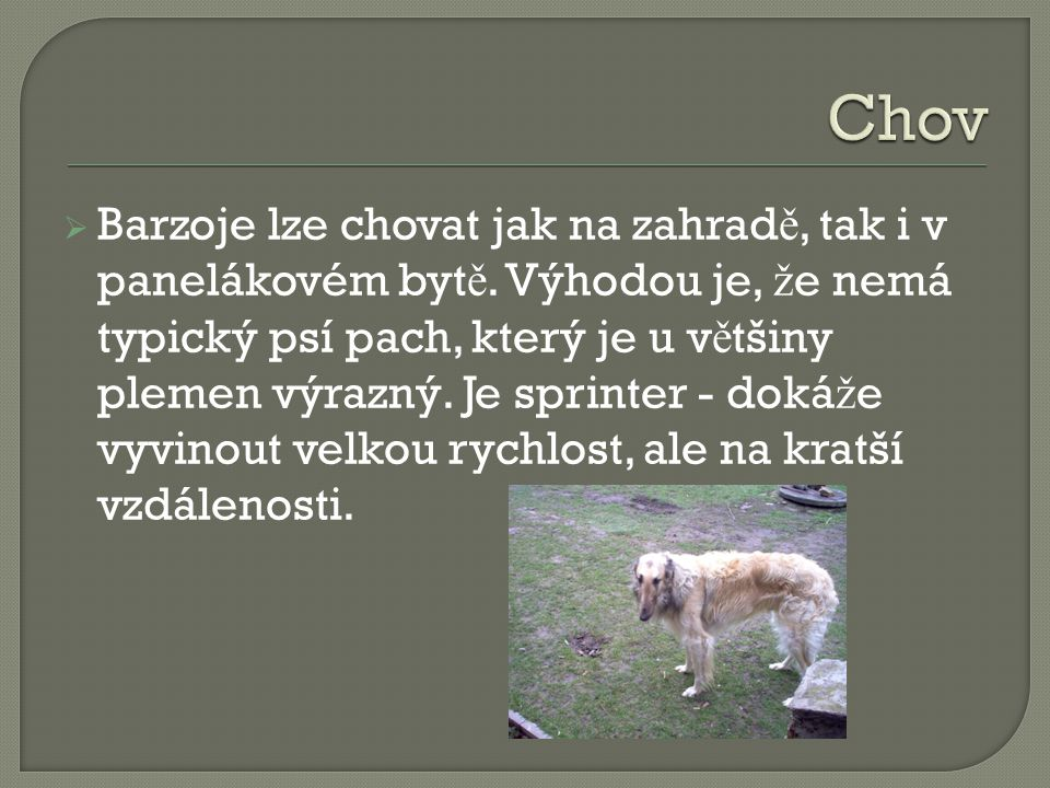 BBarzoj je velice klidný, p ř átelský a vyrovnaný pes, oddaný svému majiteli a velmi tolerantní k d ě tem.