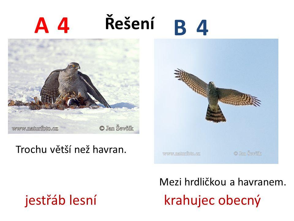 4 4 A B Trochu větší než havran. Mezi hrdličkou a havranem. jestřáb lesníkrahujec obecný Řešení