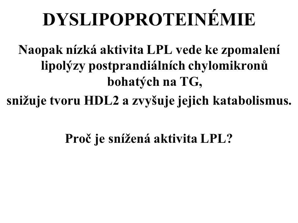 DYSLIPOPROTEINÉMIE Naopak nízká aktivita LPL vede ke zpomalení lipolýzy postprandiálních chylomikronů bohatých na TG, snižuje tvoru HDL2 a zvyšuje jej
