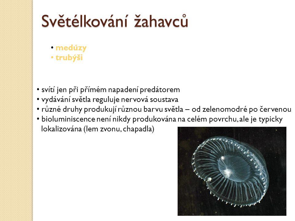 svítí jen při přímém napadení predátorem vydávání světla reguluje nervová soustava různé druhy produkují různou barvu světla – od zelenomodré po červenou bioluminiscence není nikdy produkována na celém povrchu, ale je typicky lokalizována (lem zvonu, chapadla) Světélkování žahavců medúzy trubýši