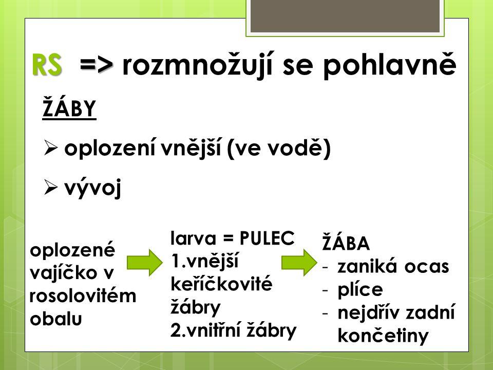 RS => RS => rozmnožují se pohlavně ŽÁBY  oplození vnější (ve vodě)  vývoj oplozené vajíčko v rosolovitém obalu larva = PULEC 1.vnější keříčkovité žá
