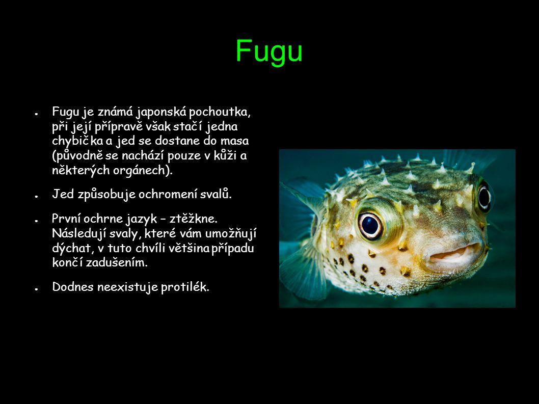 Fugu ● Fugu je známá japonská pochoutka, při její přípravě však stačí jedna chybička a jed se dostane do masa (původně se nachází pouze v kůži a někte