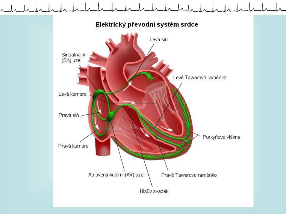 Elektrická činnost srdce Klidový potenciál na membránách Akční potenciál Depolarizace Repolarizace