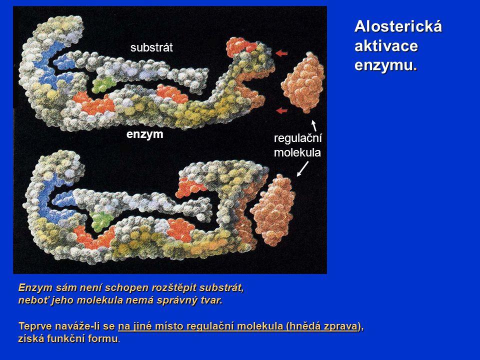 Alosterickáaktivace enzymu. Enzym sám není schopen rozštěpit substrát, neboť jeho molekula nemá správný tvar. Teprve naváže-li se na jiné místo regula