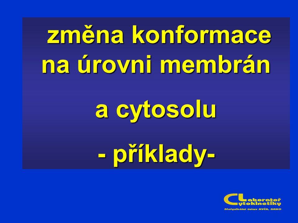 změna konformace na úrovni membrán změna konformace na úrovni membrán a cytosolu - příklady-