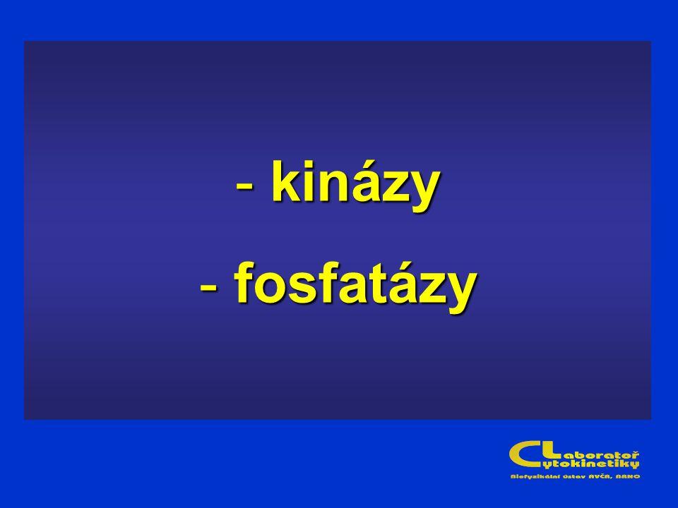 - kinázy - fosfatázy